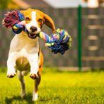 10 Best Dog Rope Toys